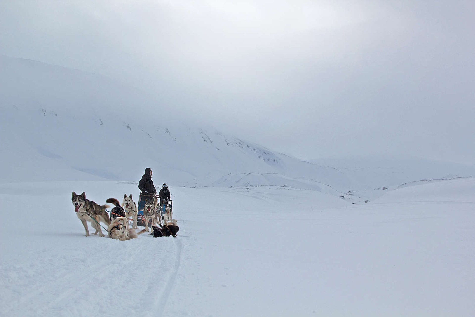 Dog Sledding in Svalbard - Best Season 2019