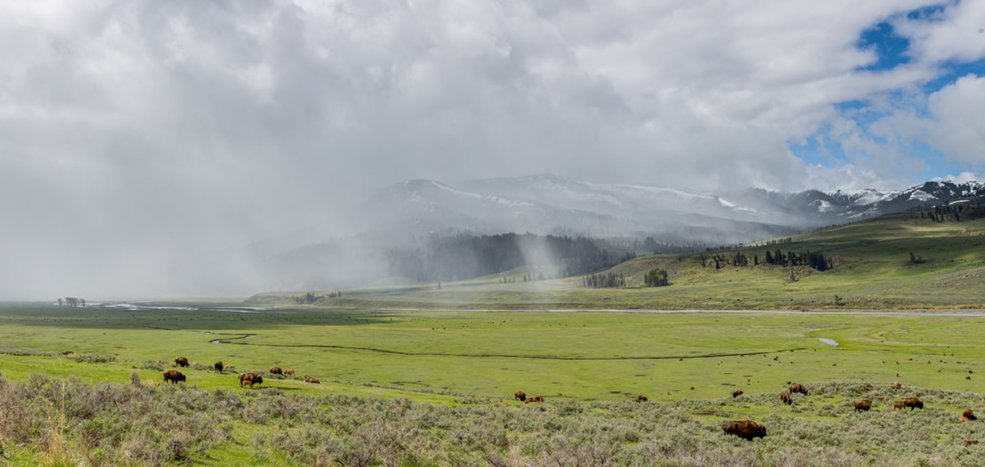 Spring in Yellowstone National Park - Best Season