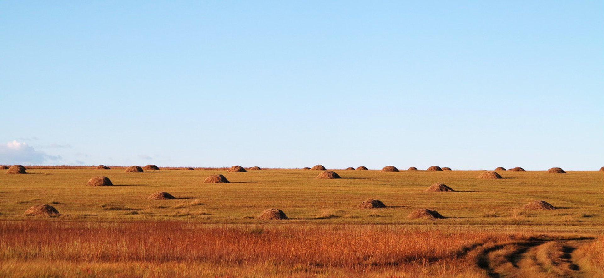 Hay Harvest in Mongolia 2019 - Best Time