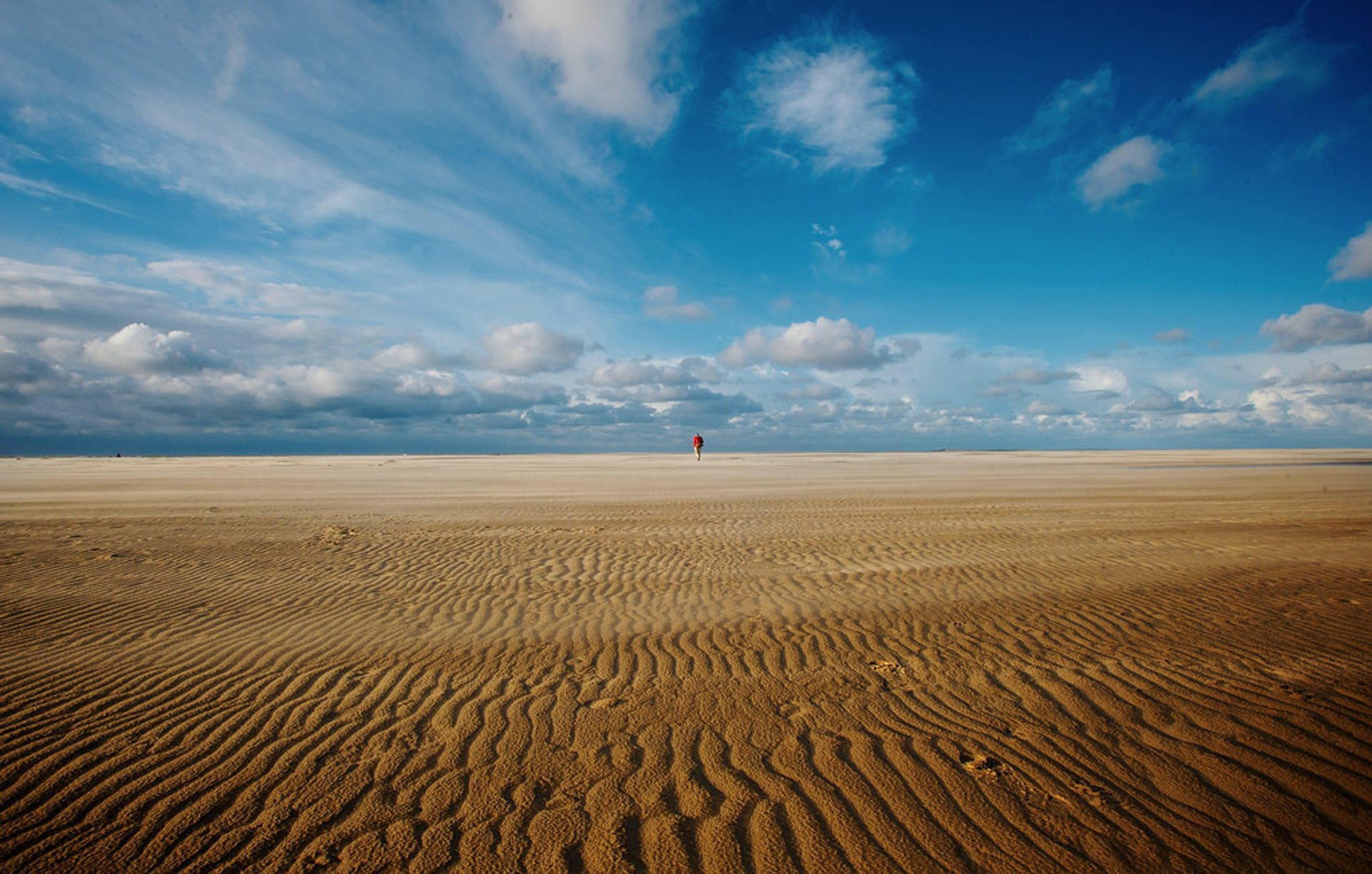Dunes at Texel in The Netherlands - Best Season 2020