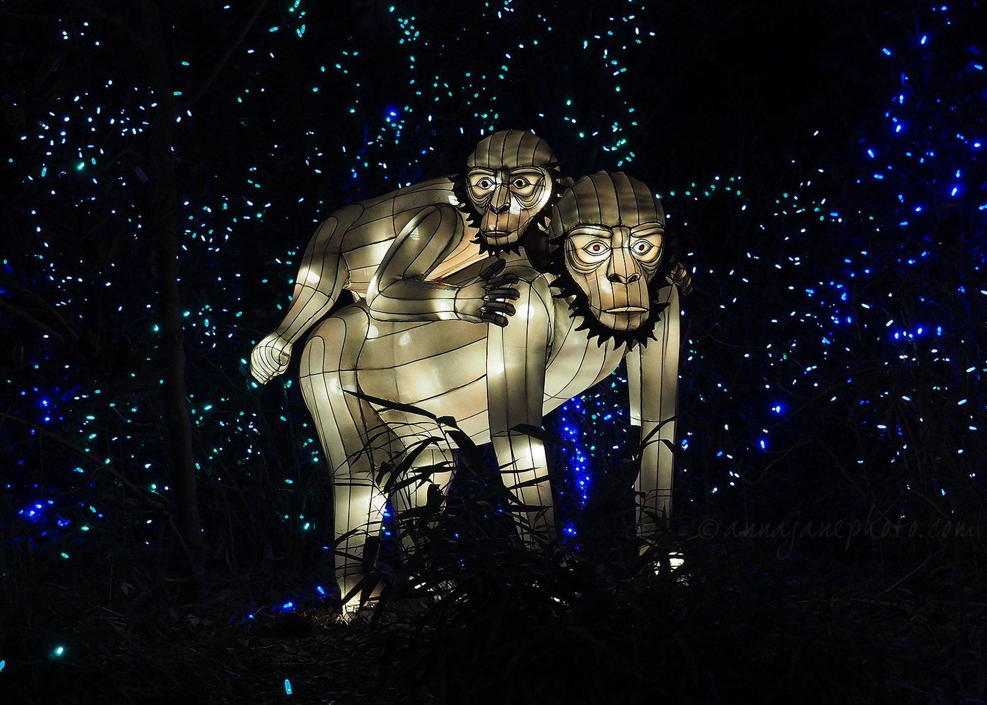 PNC Festival of Lights at Cincinnati Zoo 2020