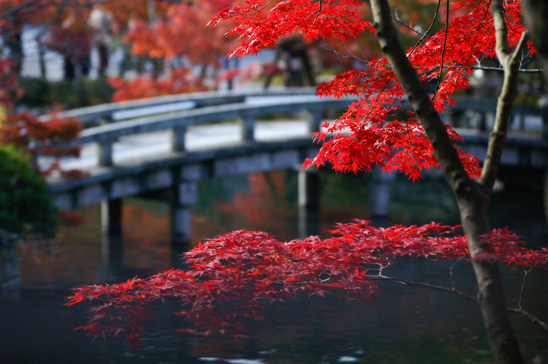 Best time for Autumn Foliage (Kōyō) in Kyoto 2020