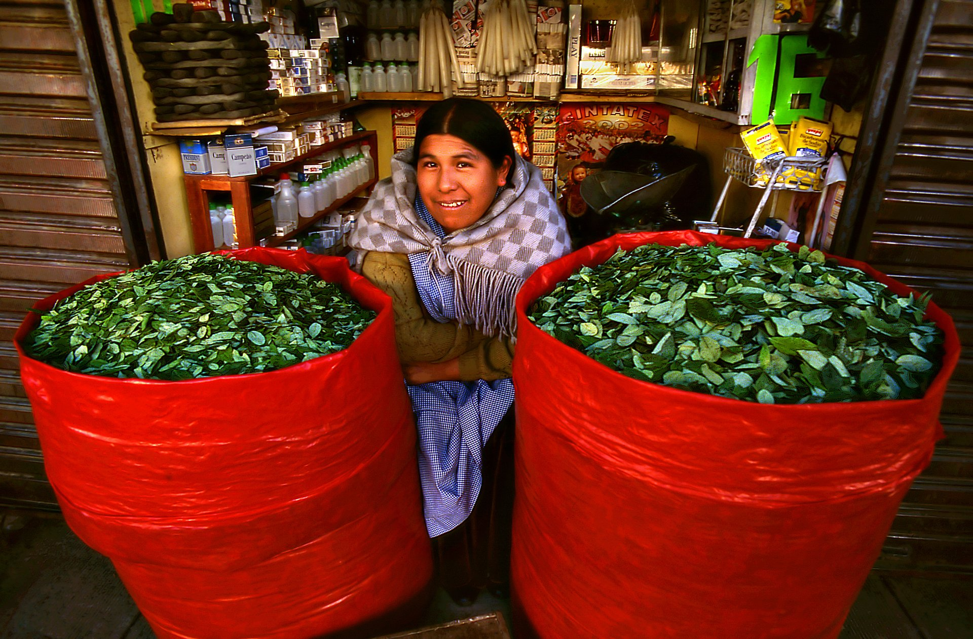 Coca Leaves Harvest in Bolivia - Best Season 2020