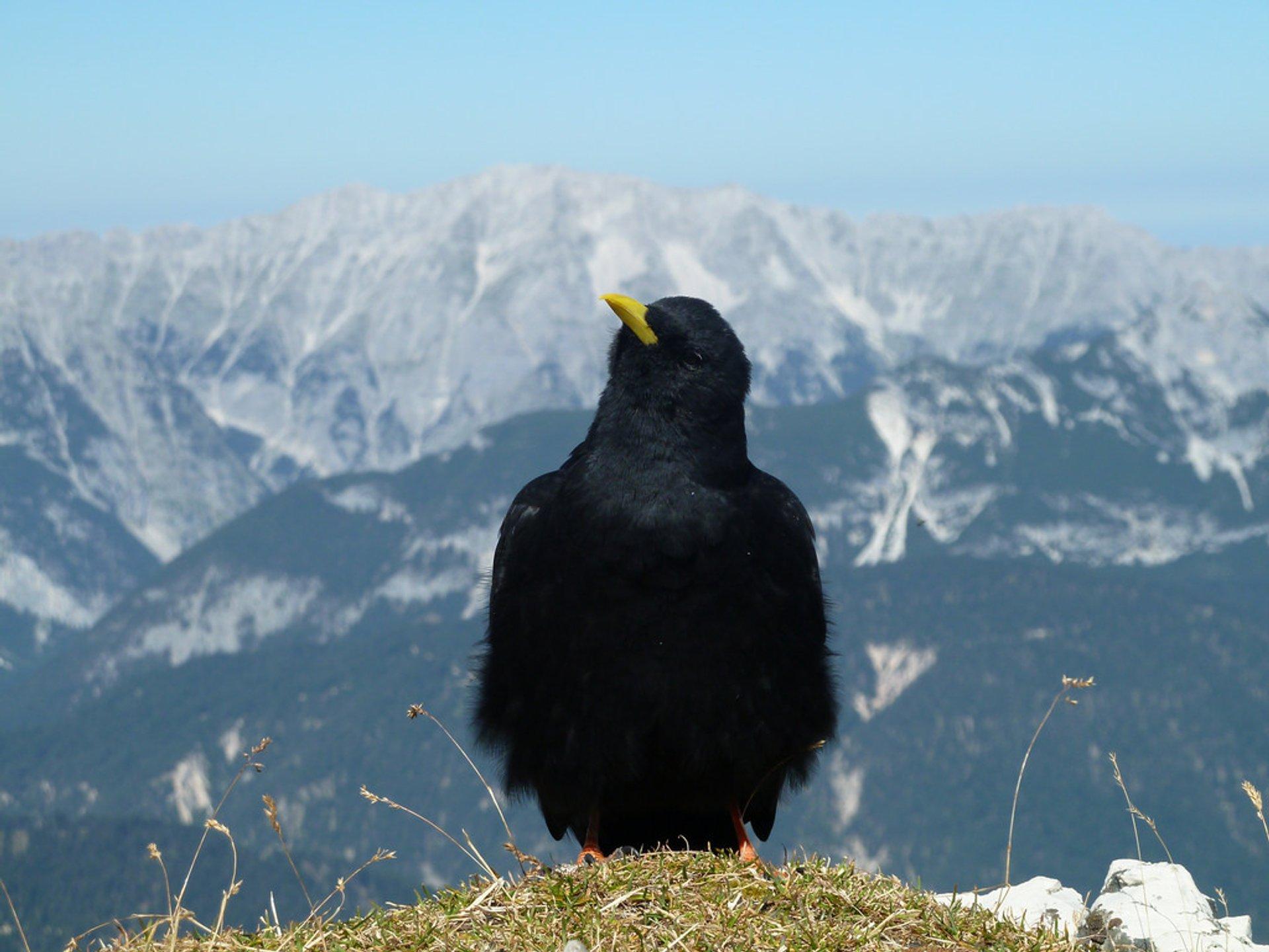 Best time for Birdwatching in Austria 2020