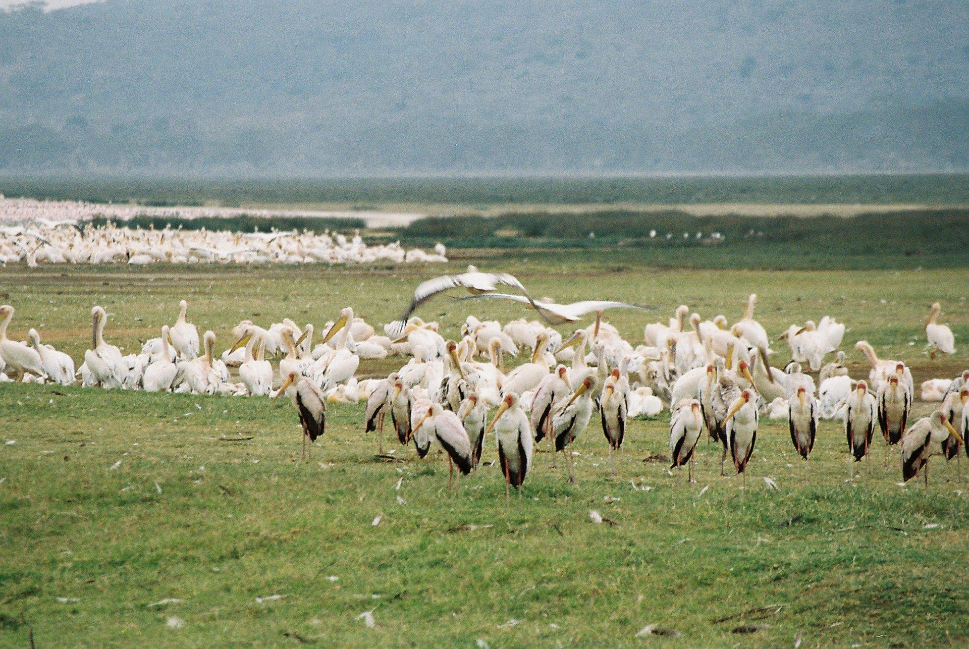 Birding at Great Rift Valley in Kenya - Best Season 2019