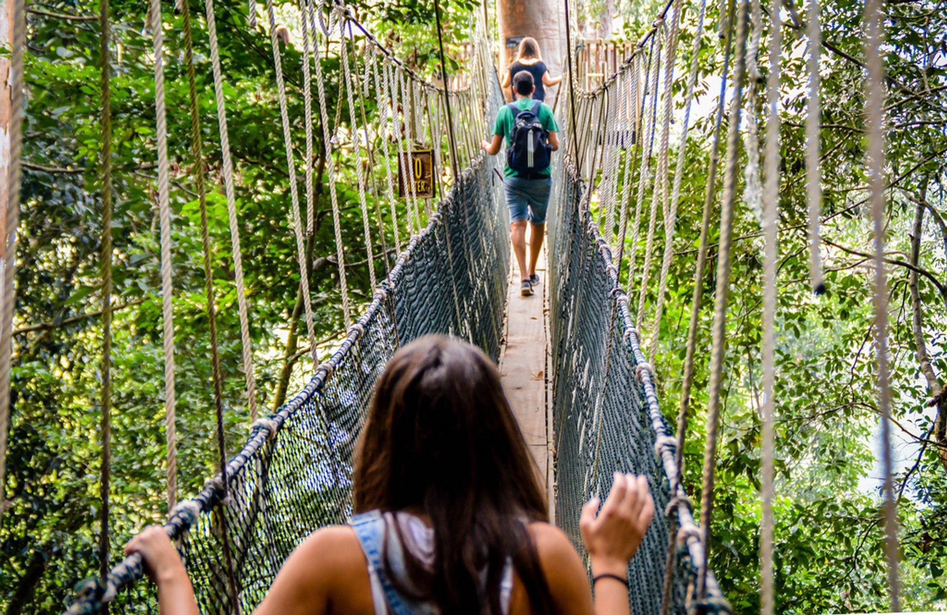 Canopy Walks in Peninsular Malaysia in Malaysia - Best Season