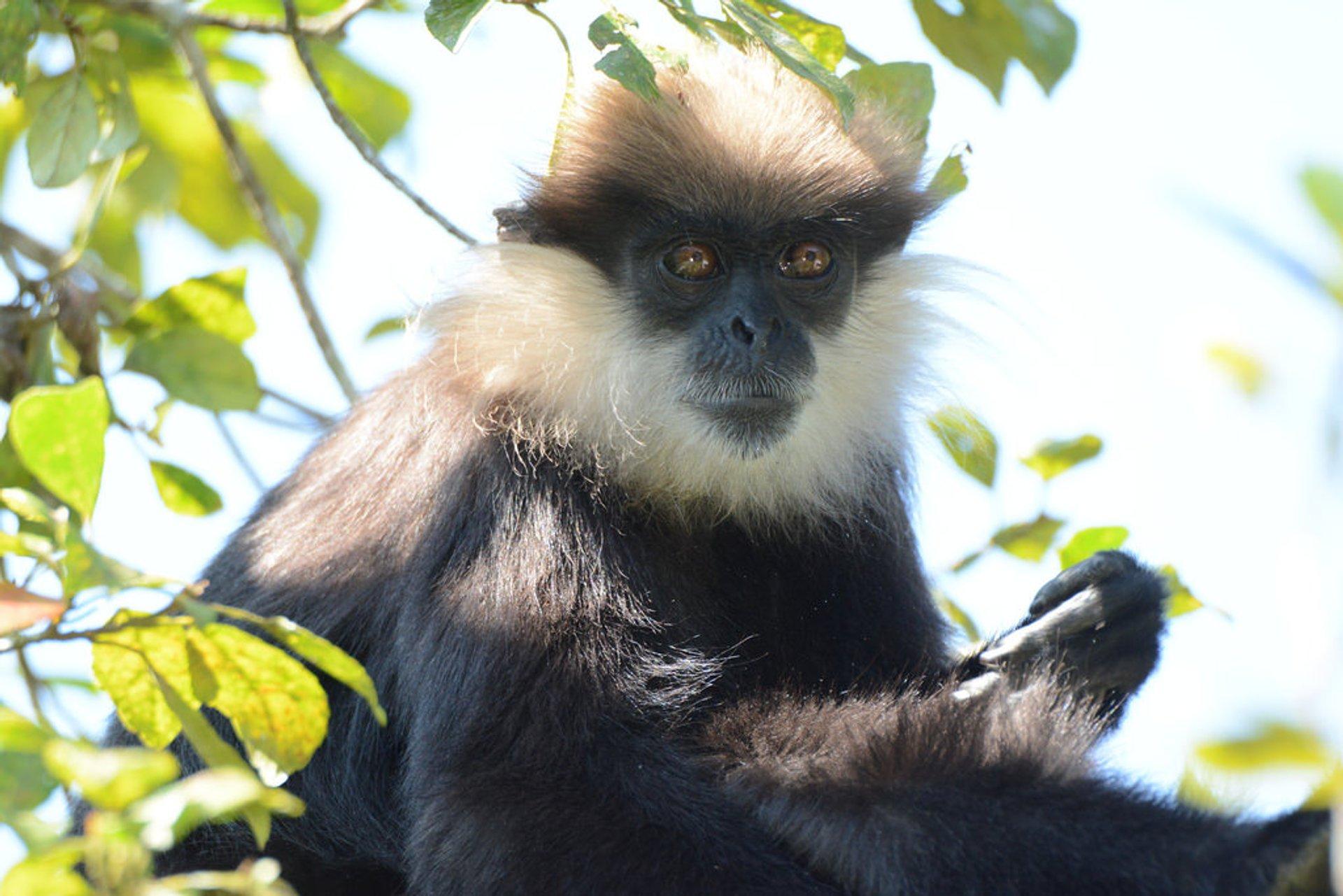 Best time for Sinharaja Rainforest in Sri Lanka 2020