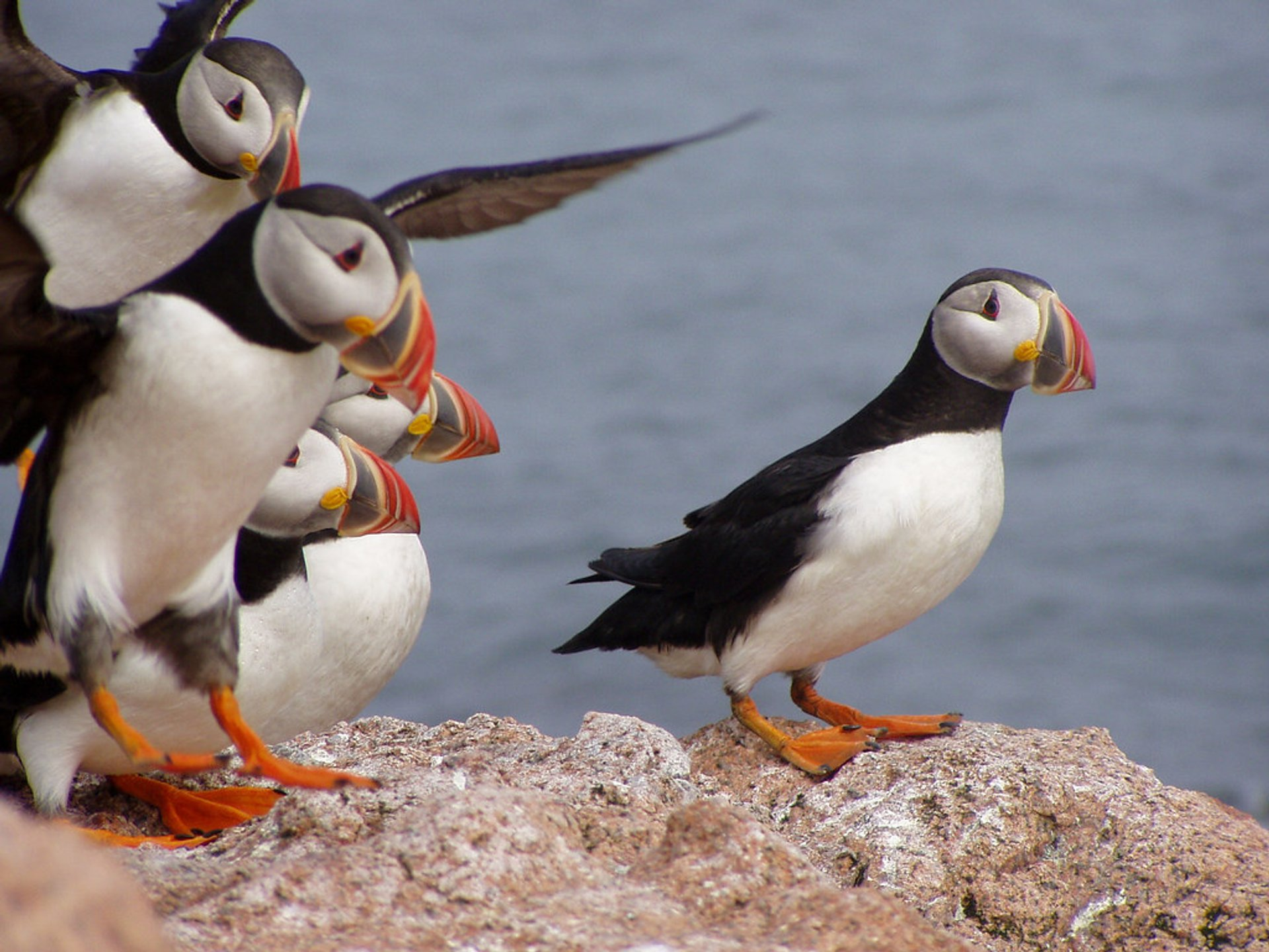 Puffin Watching in Maine 2020 - Best Time
