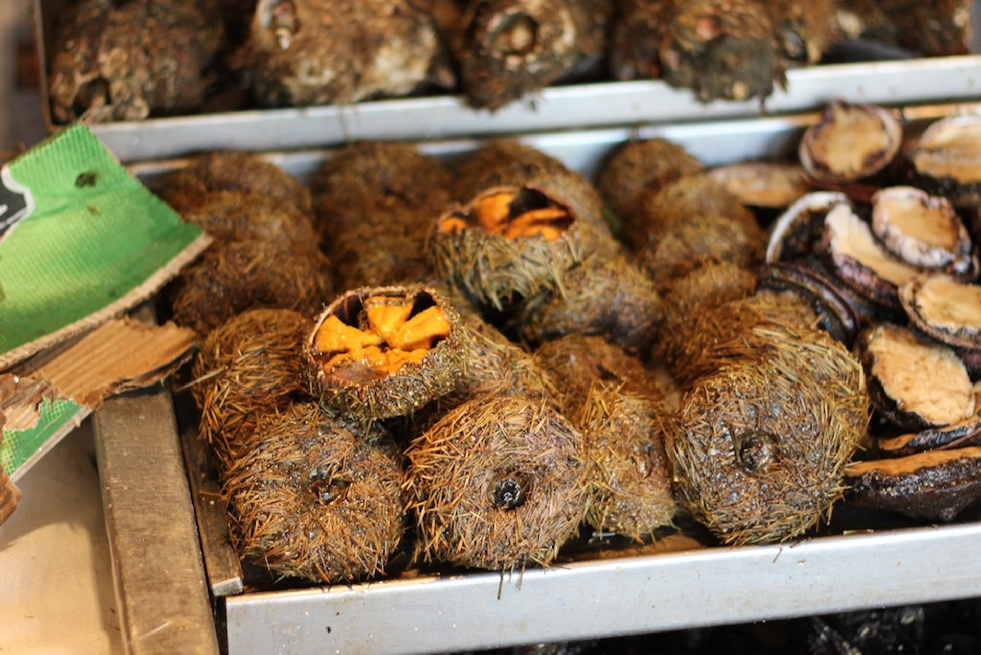 Sea Urchins or Erizos in Chile 2020 - Best Time