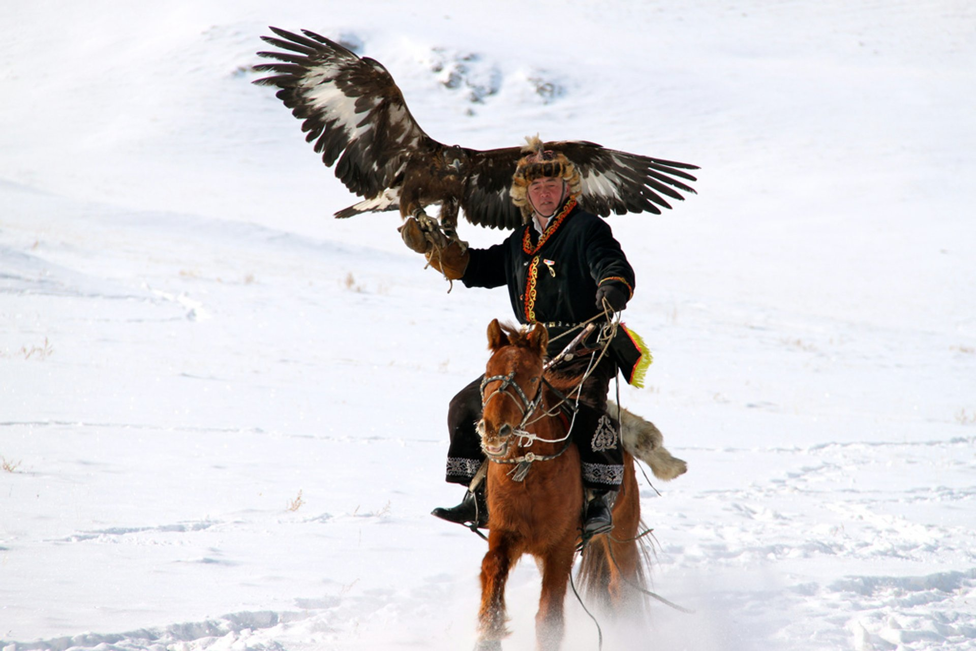 Hunting with Eagles in Mongolia 2019 - Best Time