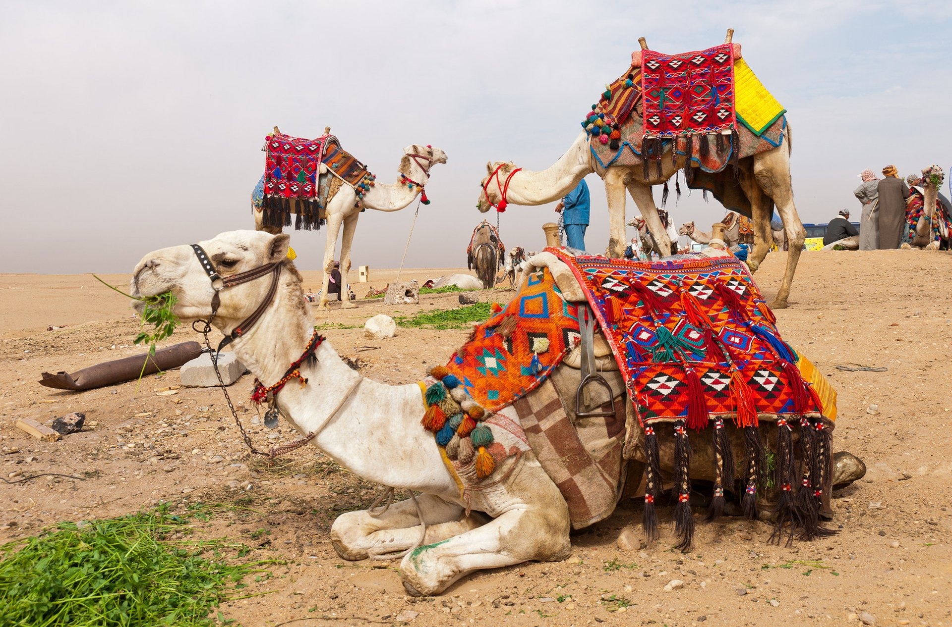Camel Riding at Giza in Pleasant Weather in Egypt - Best Season 2020