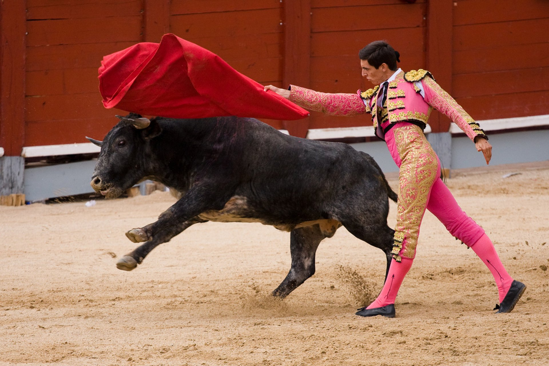 Bullfighting (Corrida de Toros) in Madrid 2019 - Best Time