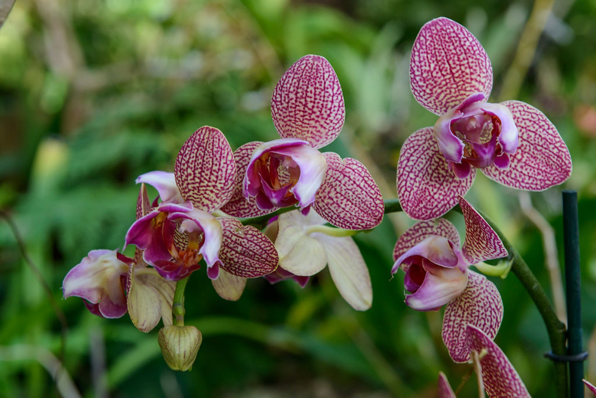 Orchid Bloom in Madeira 2019 - Best Time