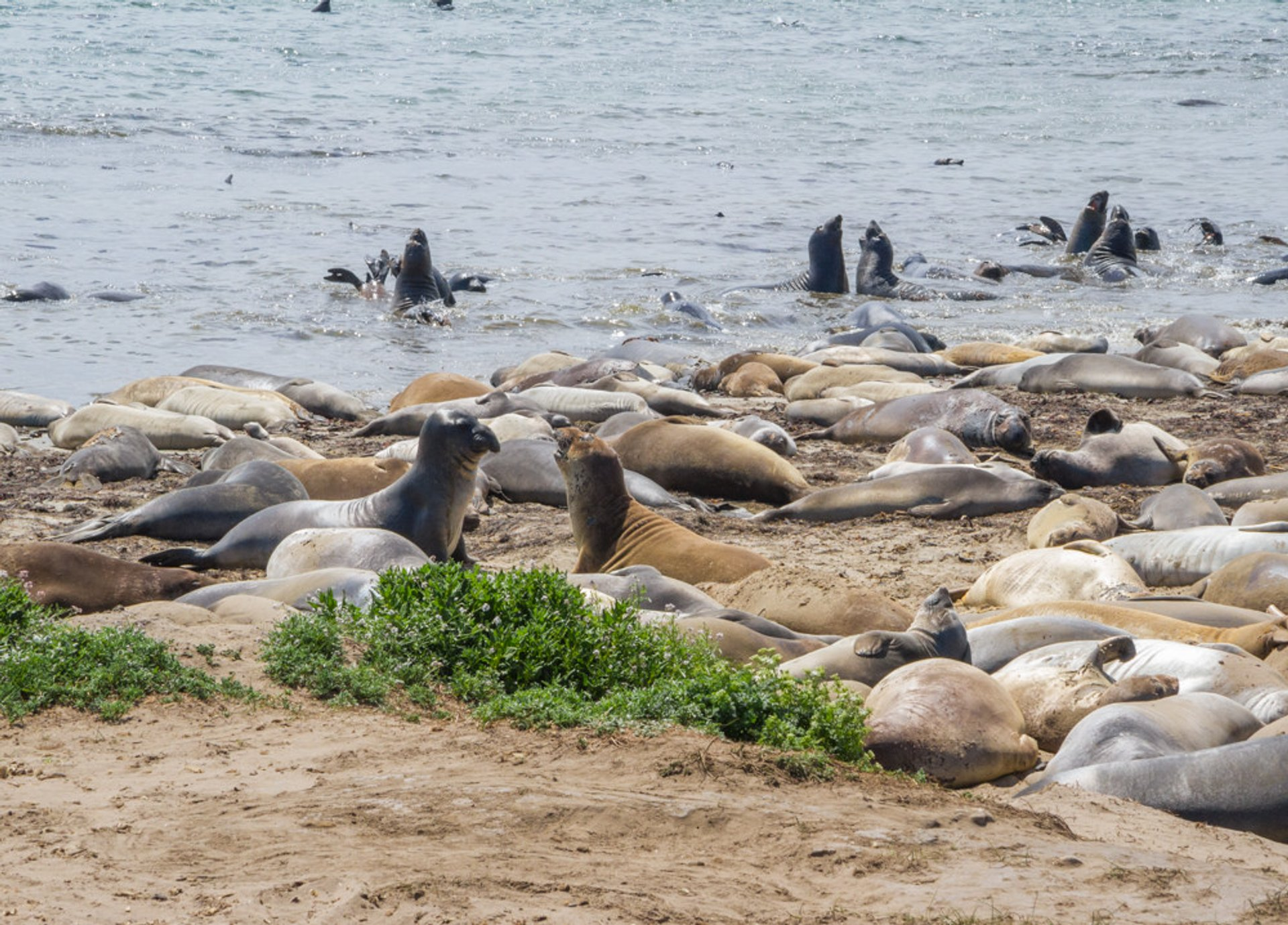Best time to see Elephant Seals in California 2019