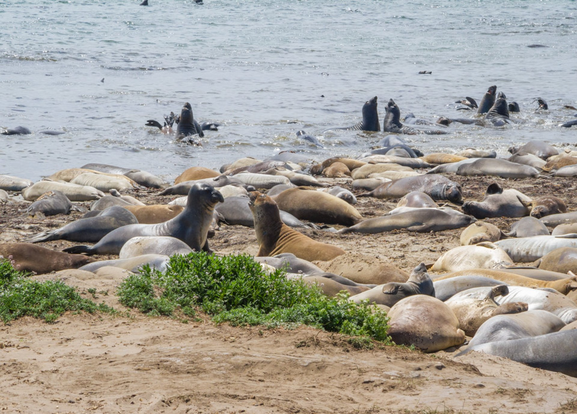 Best time to see Elephant Seals in California 2020