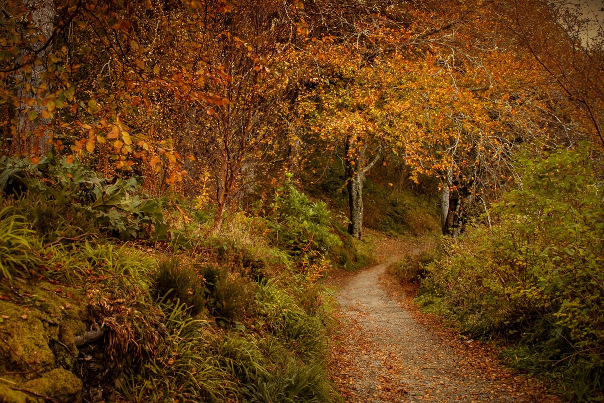 Autumn Foliage in Scotland - Best Season 2020