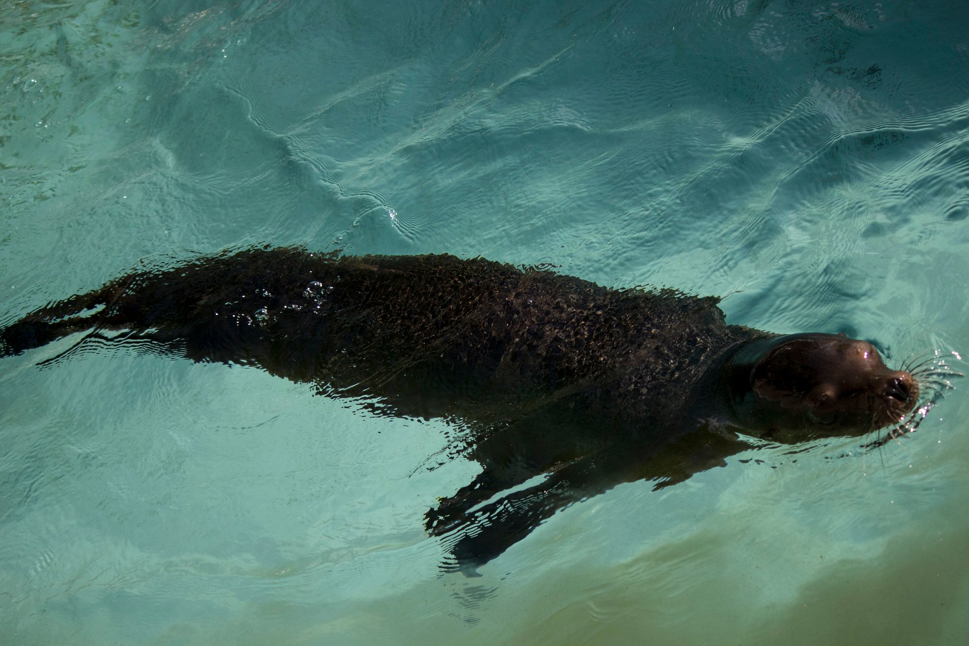 Seal at the Pittsburgh Zoo & PPG Aquarium 2020