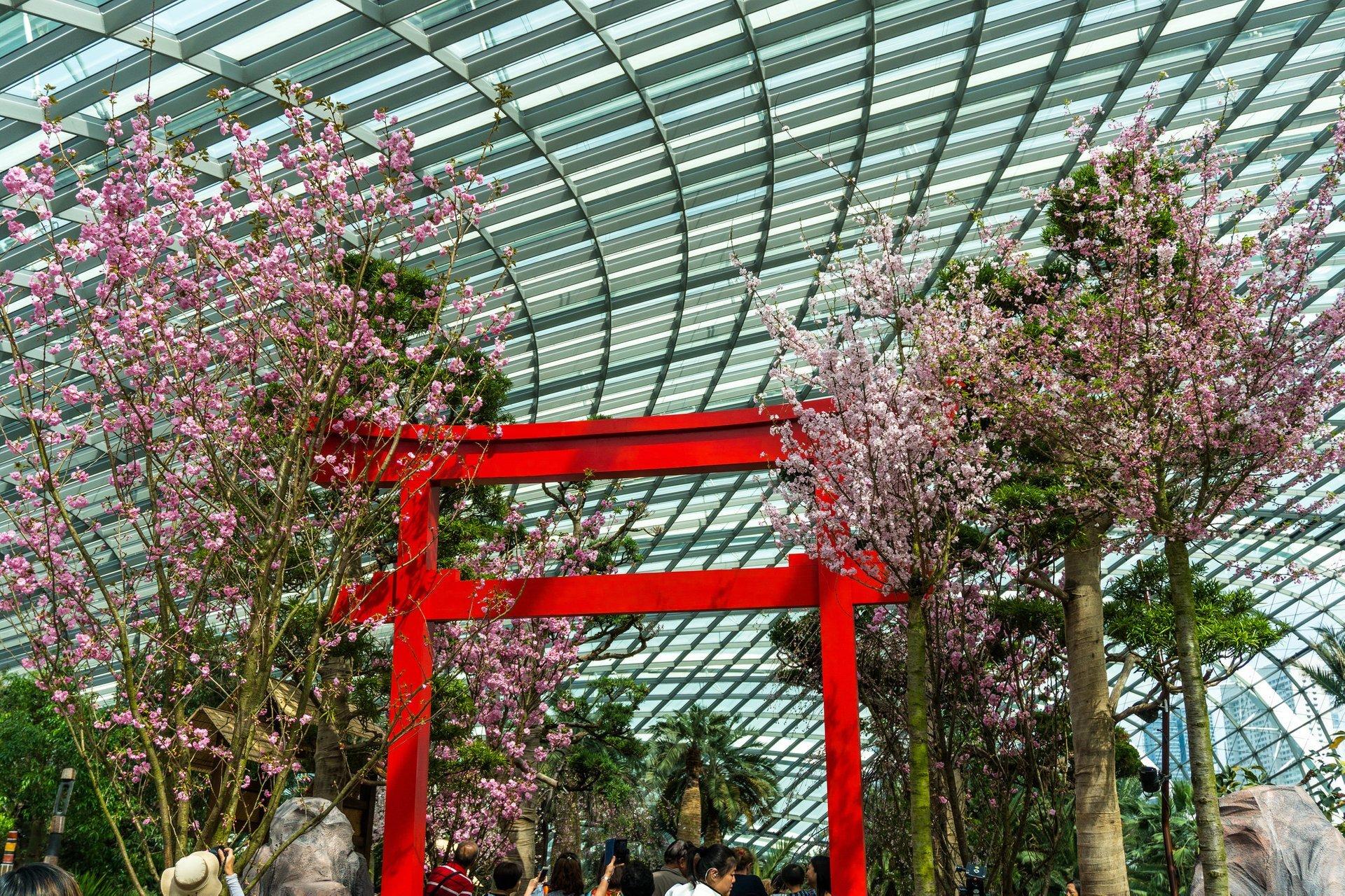 Sakura Matsuri Floral Display in Singapore 2019 - Best Time