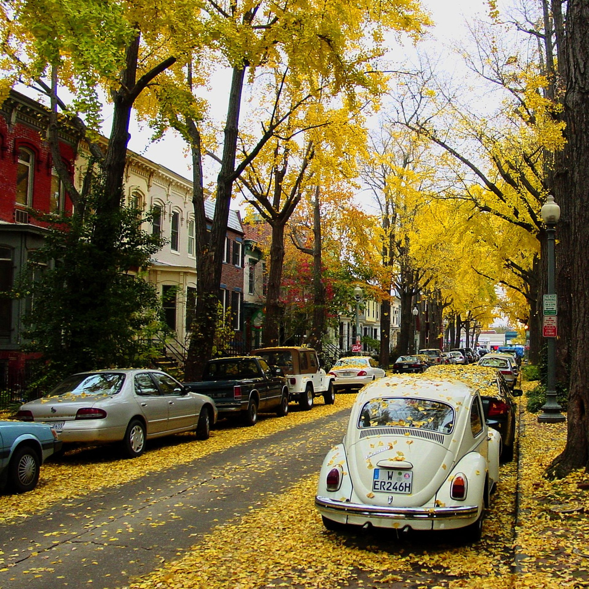 Autumn in Swann Street, Washington, D.C.  2020