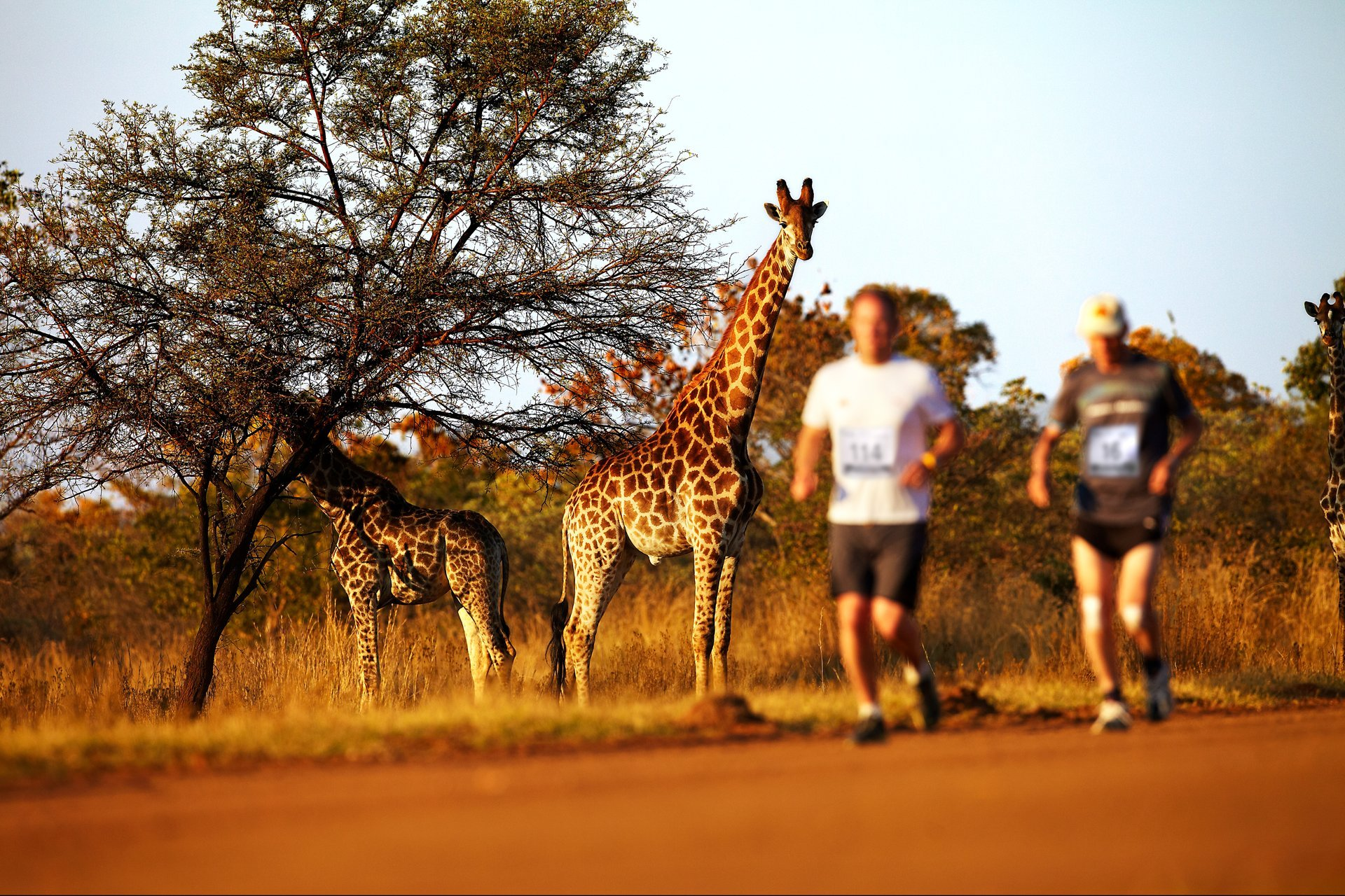 Best time for Big Five Marathon in South Africa 2020