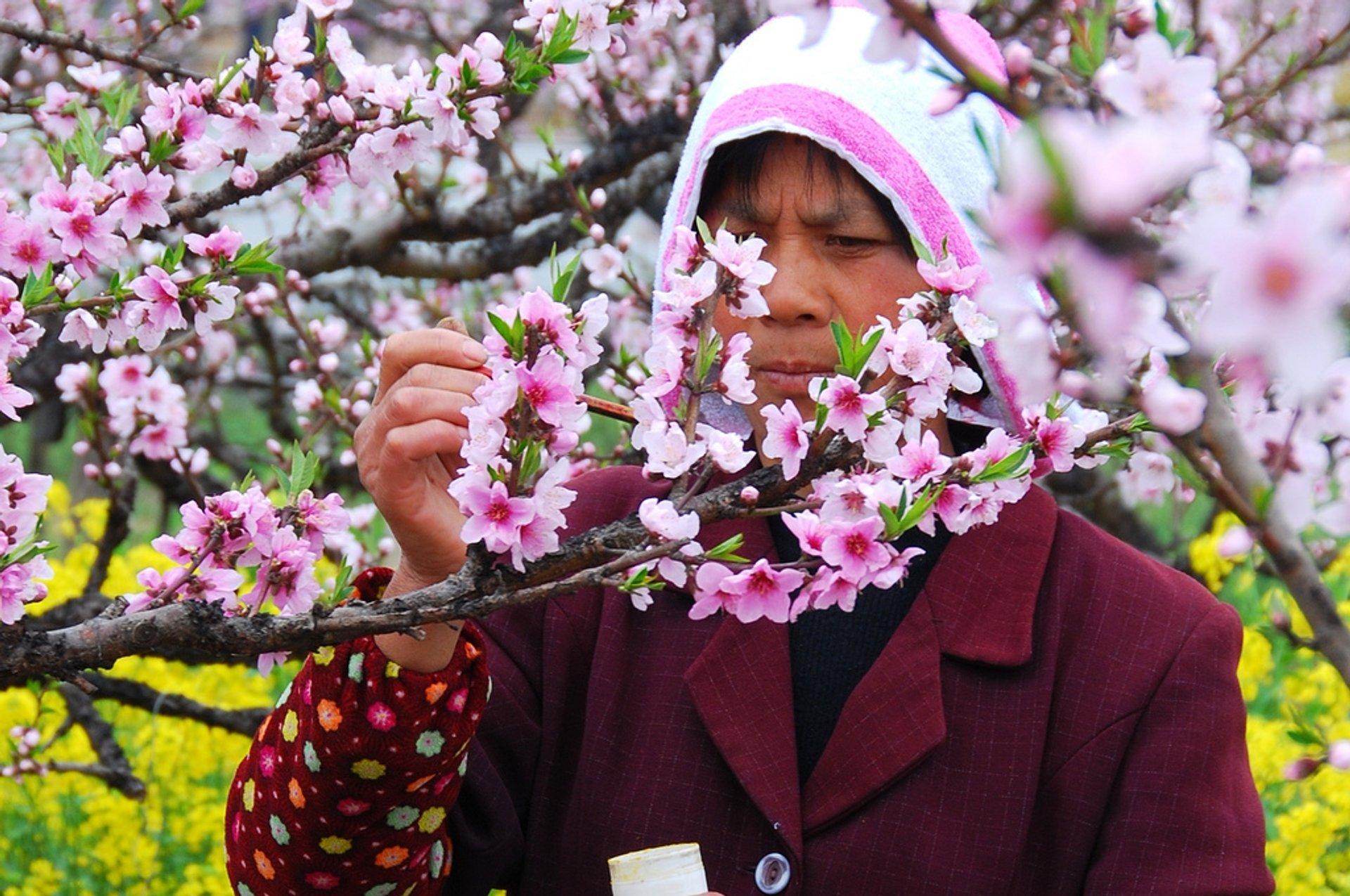 Nanhui Peach Blossom Festival 2020