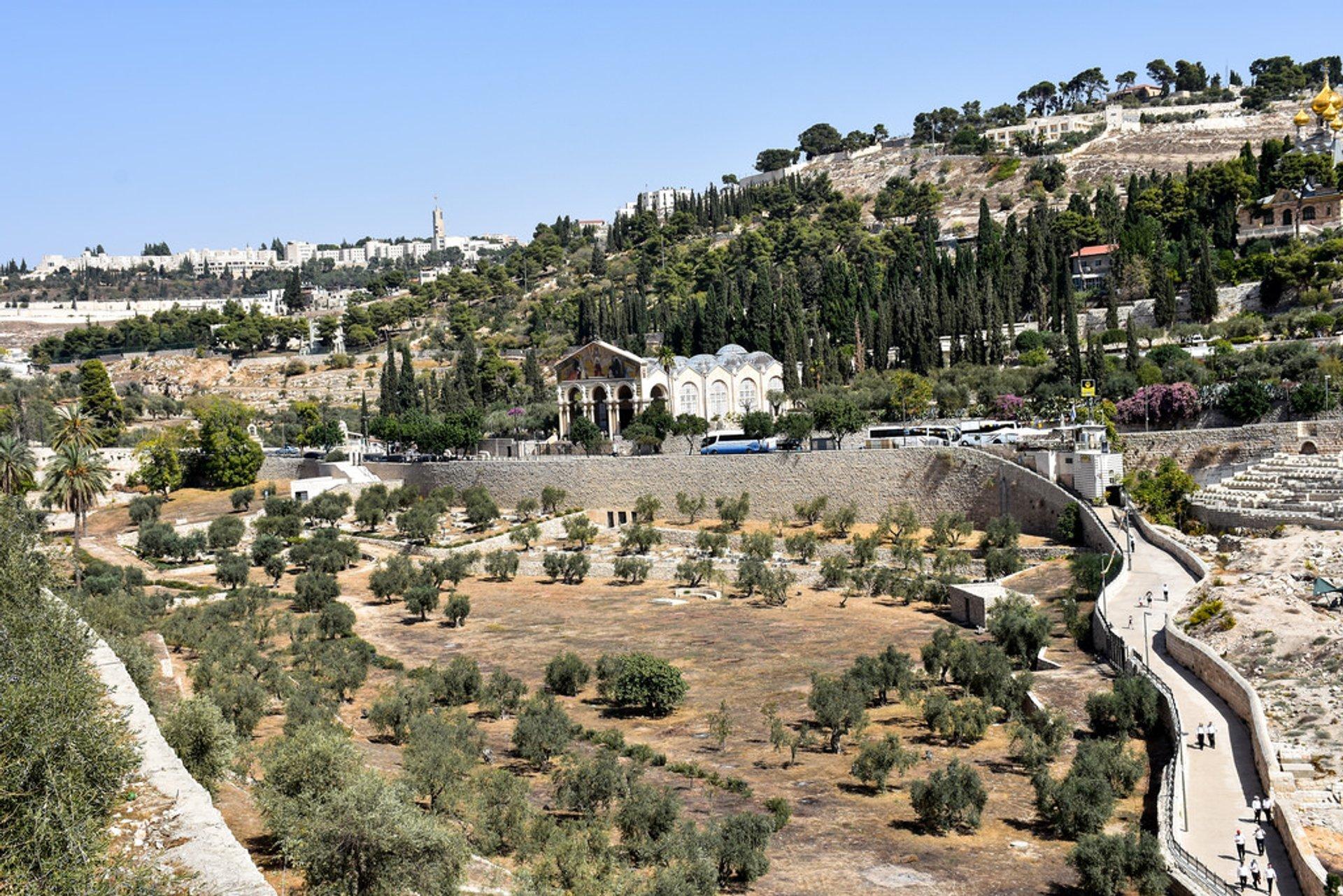 The Kidron Valley 2019