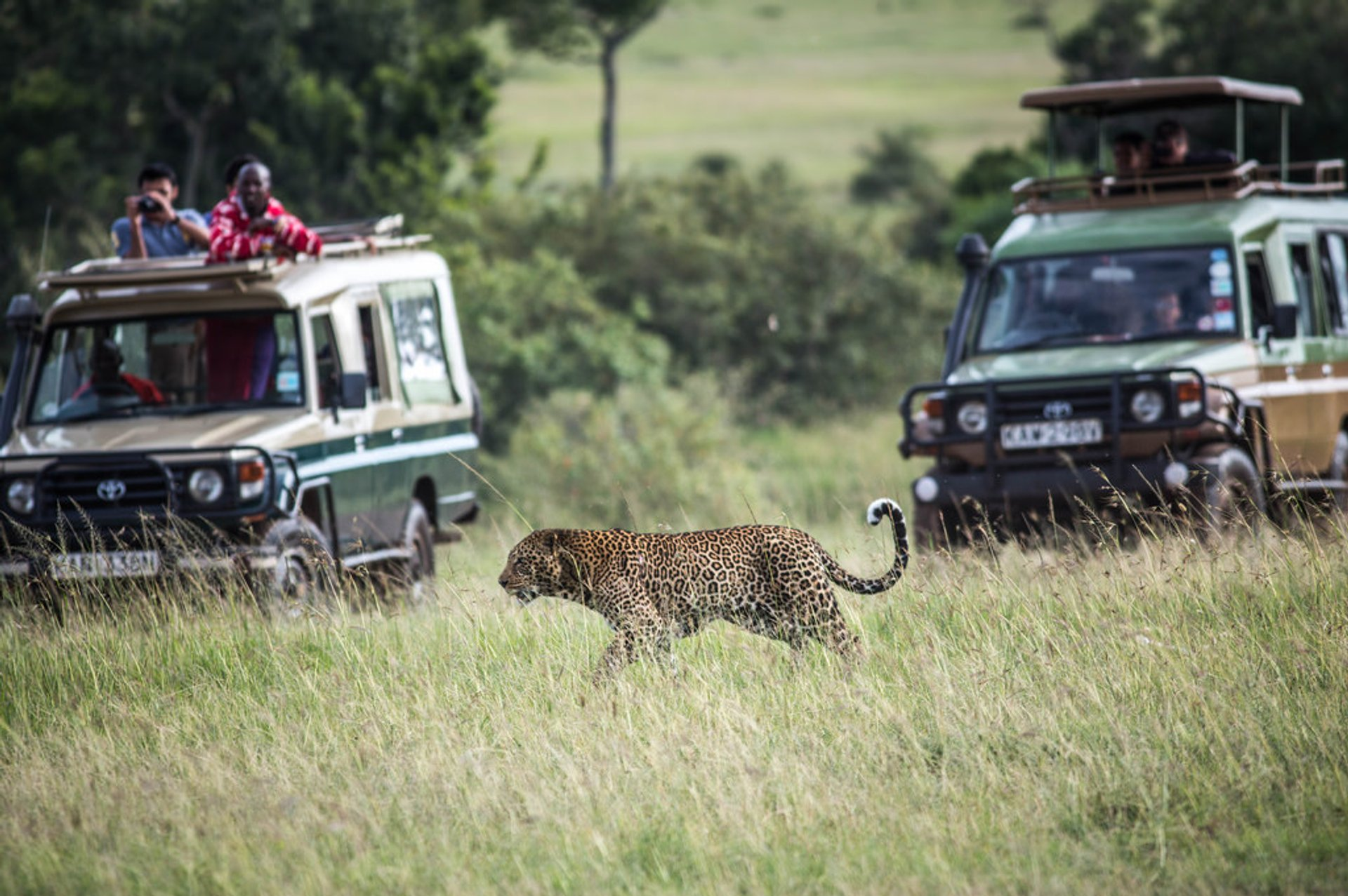 Safari Adventure in Kenya 2019 - Best Time