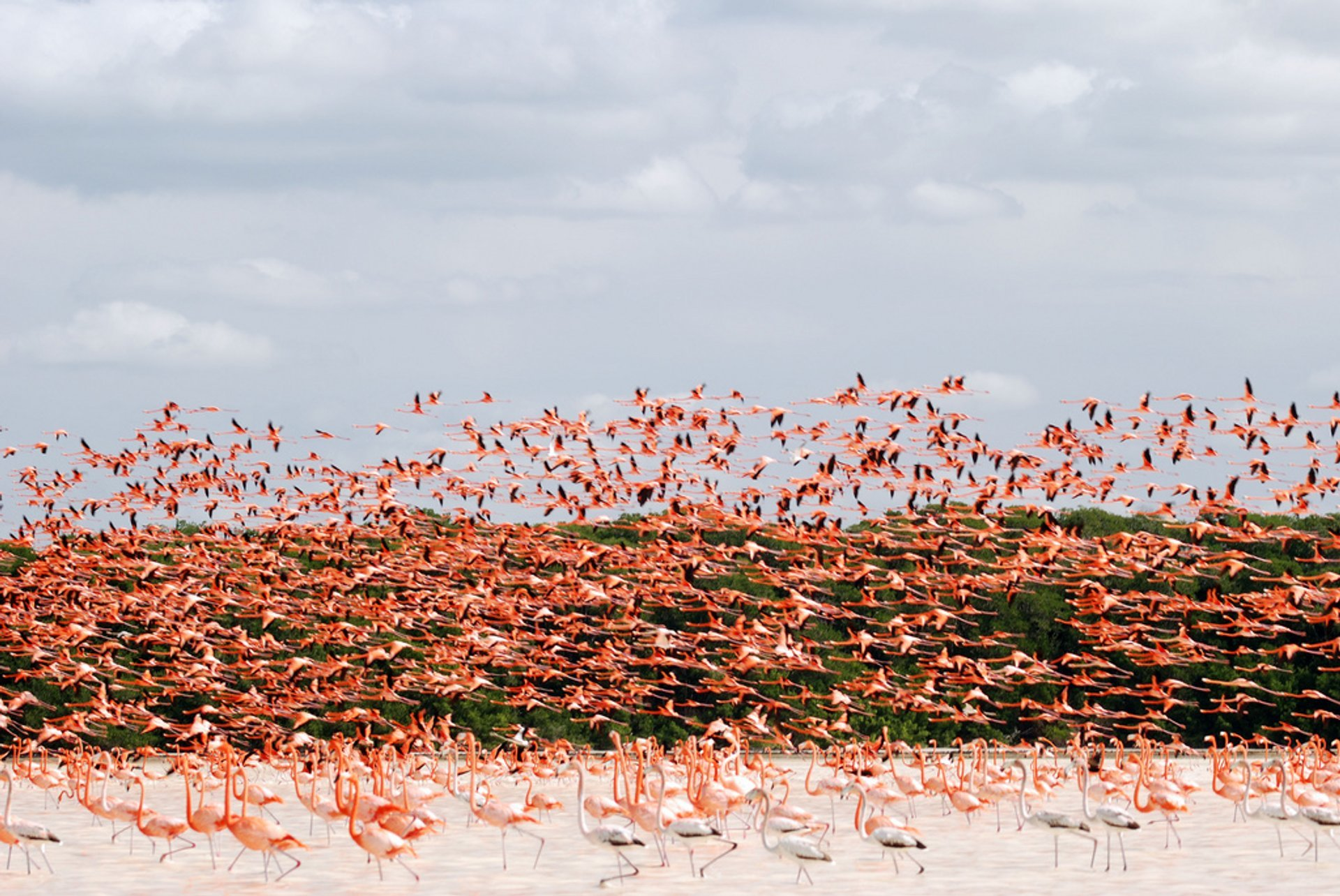 Flamingos of Isla de Arena 2020