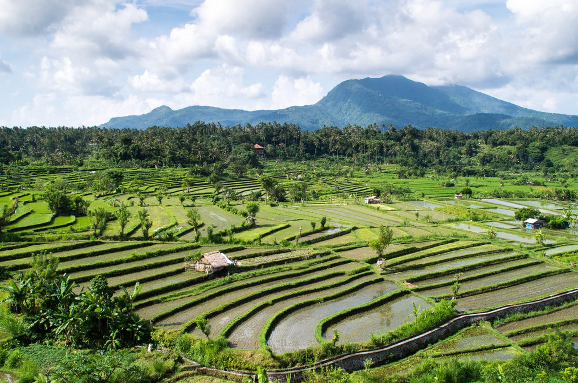 Rice terraces in Bali 2020
