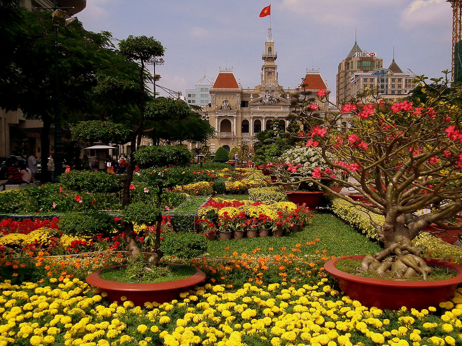 Plants for Tet in Vietnam 2020 - Best Time