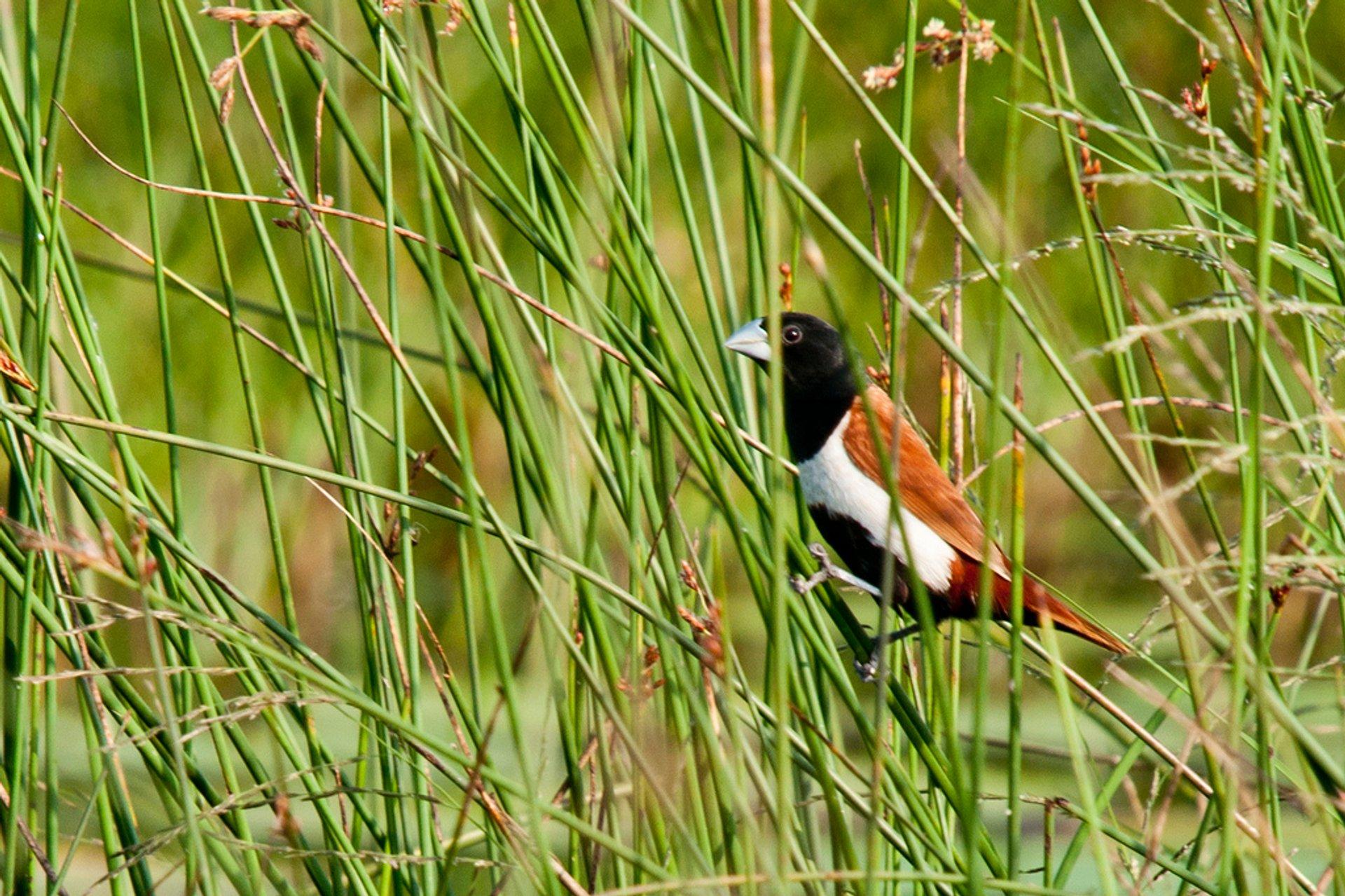 Birdwatching in Vietnam - Best Time