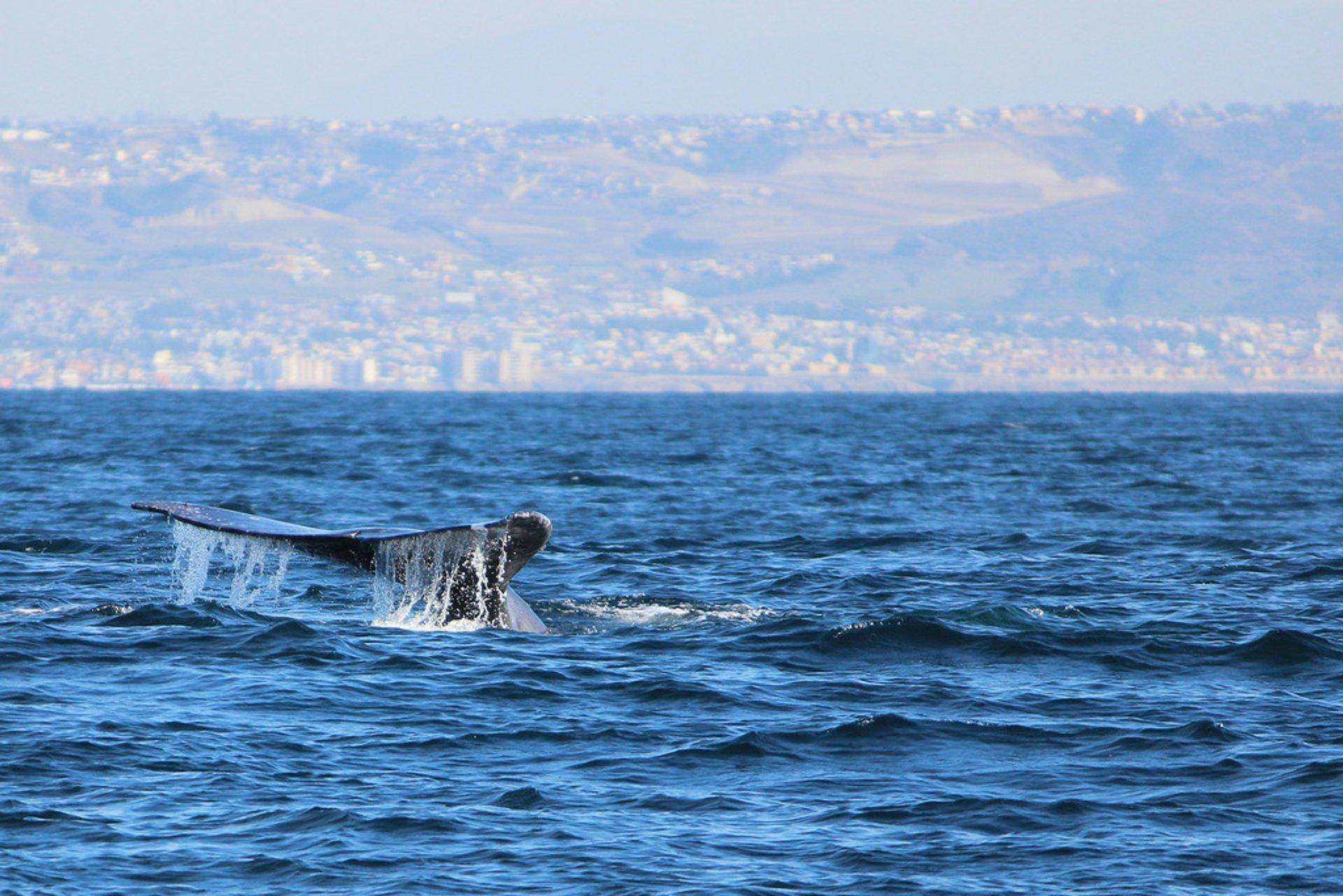 Gray whales off San Diego & Tijuana 2020
