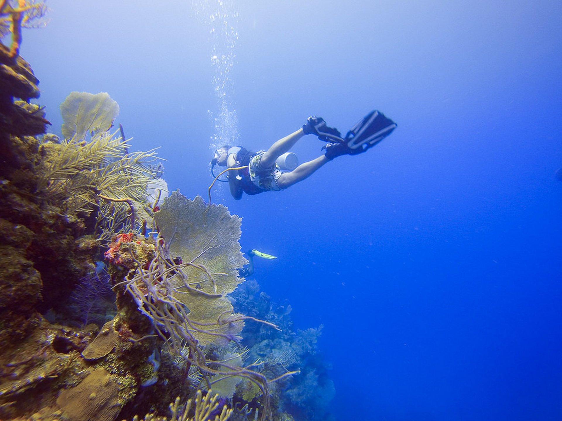Diving in Honduras - Best Season 2019