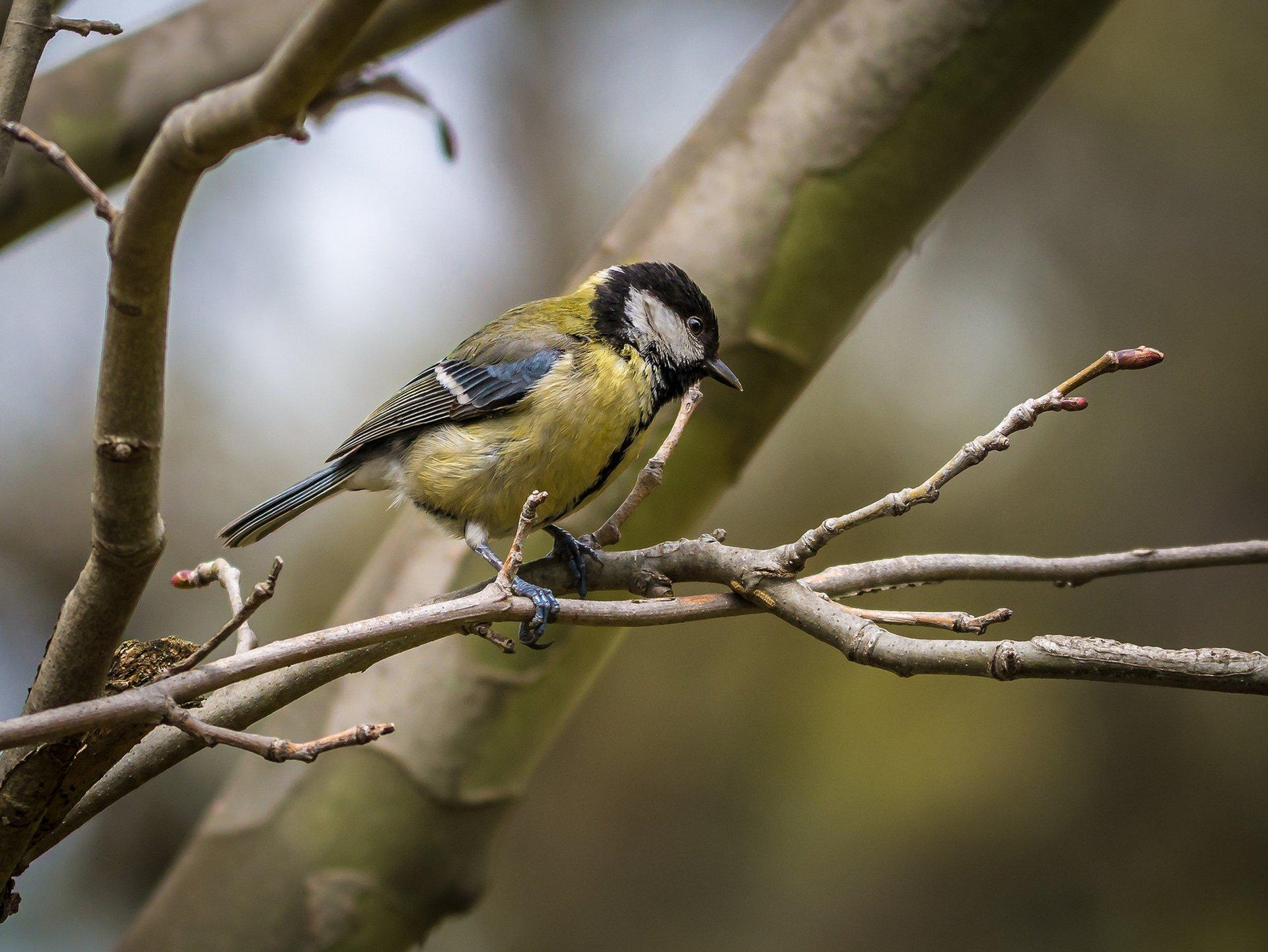 Birdwatching in Albania 2019 - Best Time