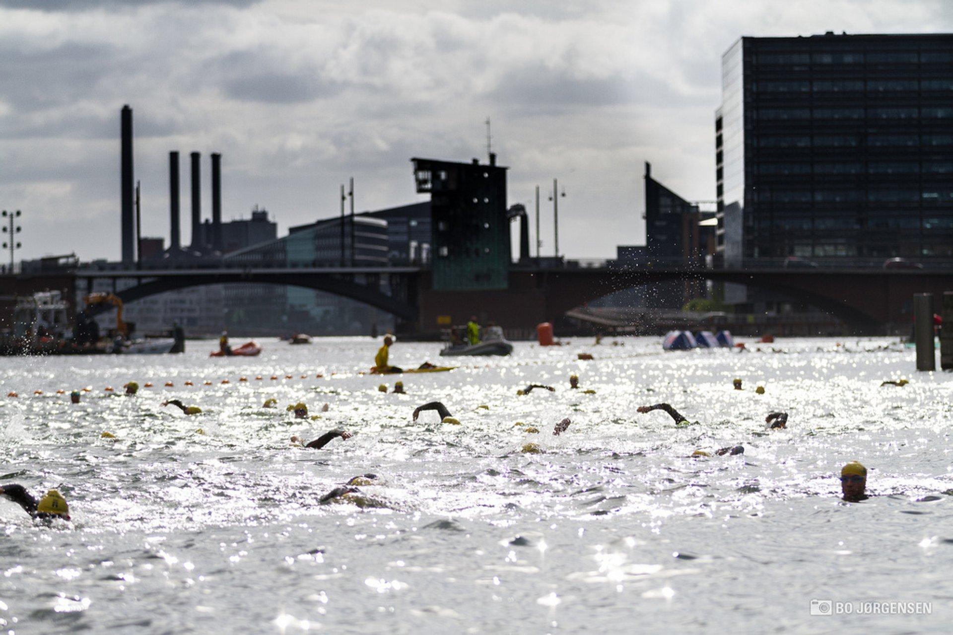 TrygFonden Christiansborg Rundt Copenhagen Swim in Copenhagen - Best Season 2020