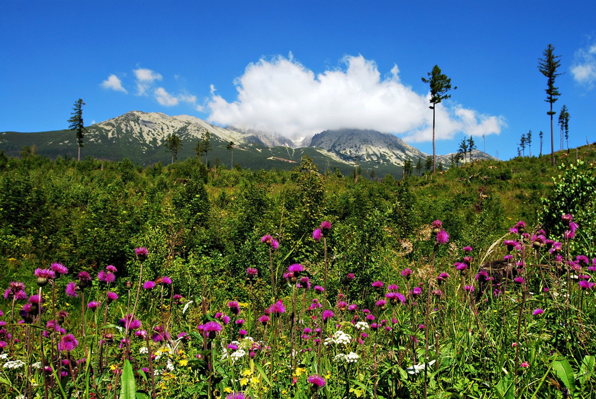 Best time for Wildflower Bloom in the High Tatras in Slovakia 2020