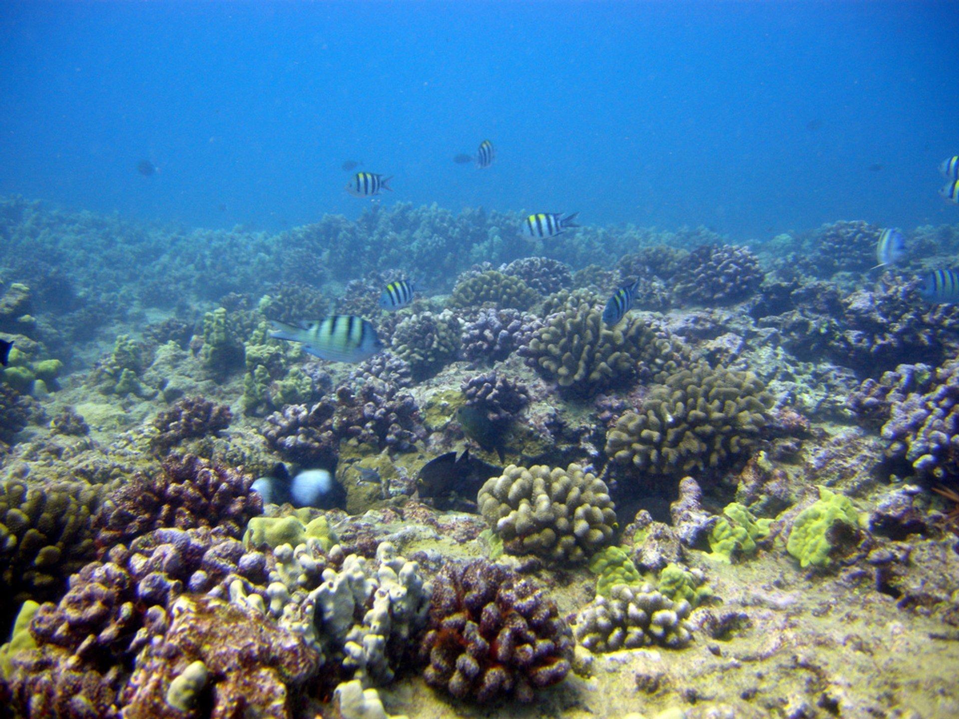 Scuba Diving in Hawaii - Best Season 2019