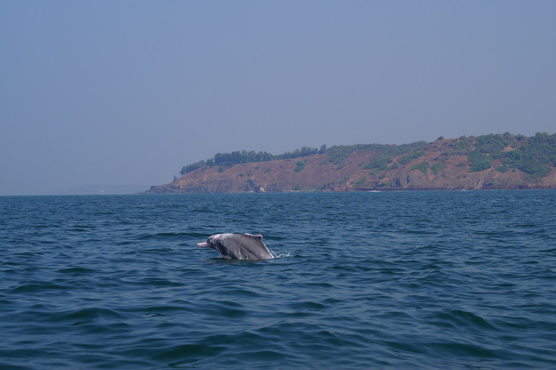 Dolphin Watching in Goa - Best Season 2019