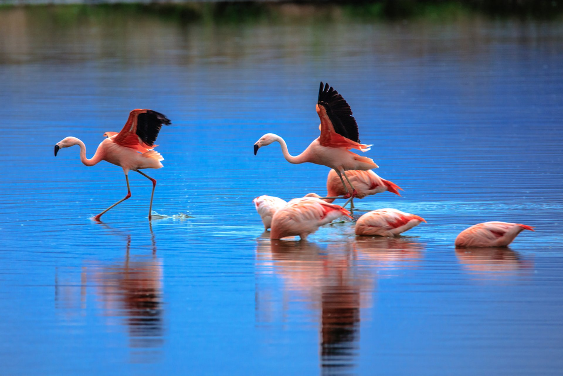 Reserva Laguna Nimez in El Calafate, Argentina 2020