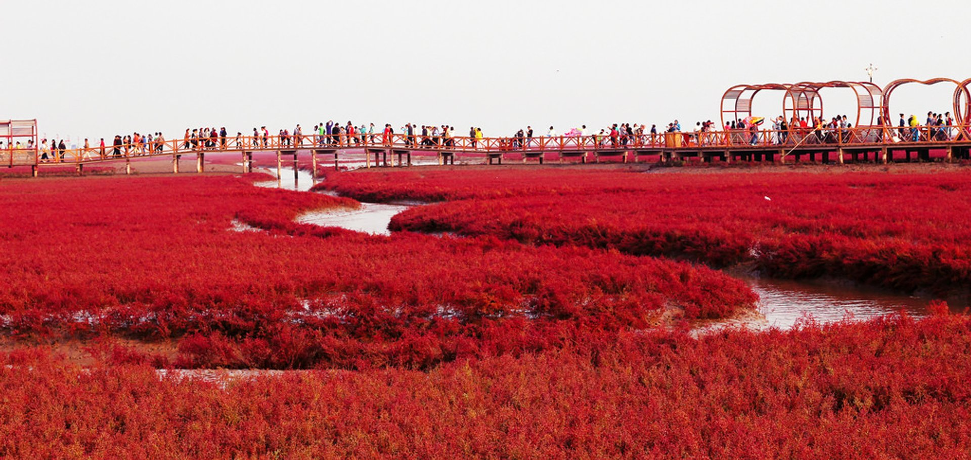 Best Time to See Panjin Red Beach in China 2020 - When & Where to See