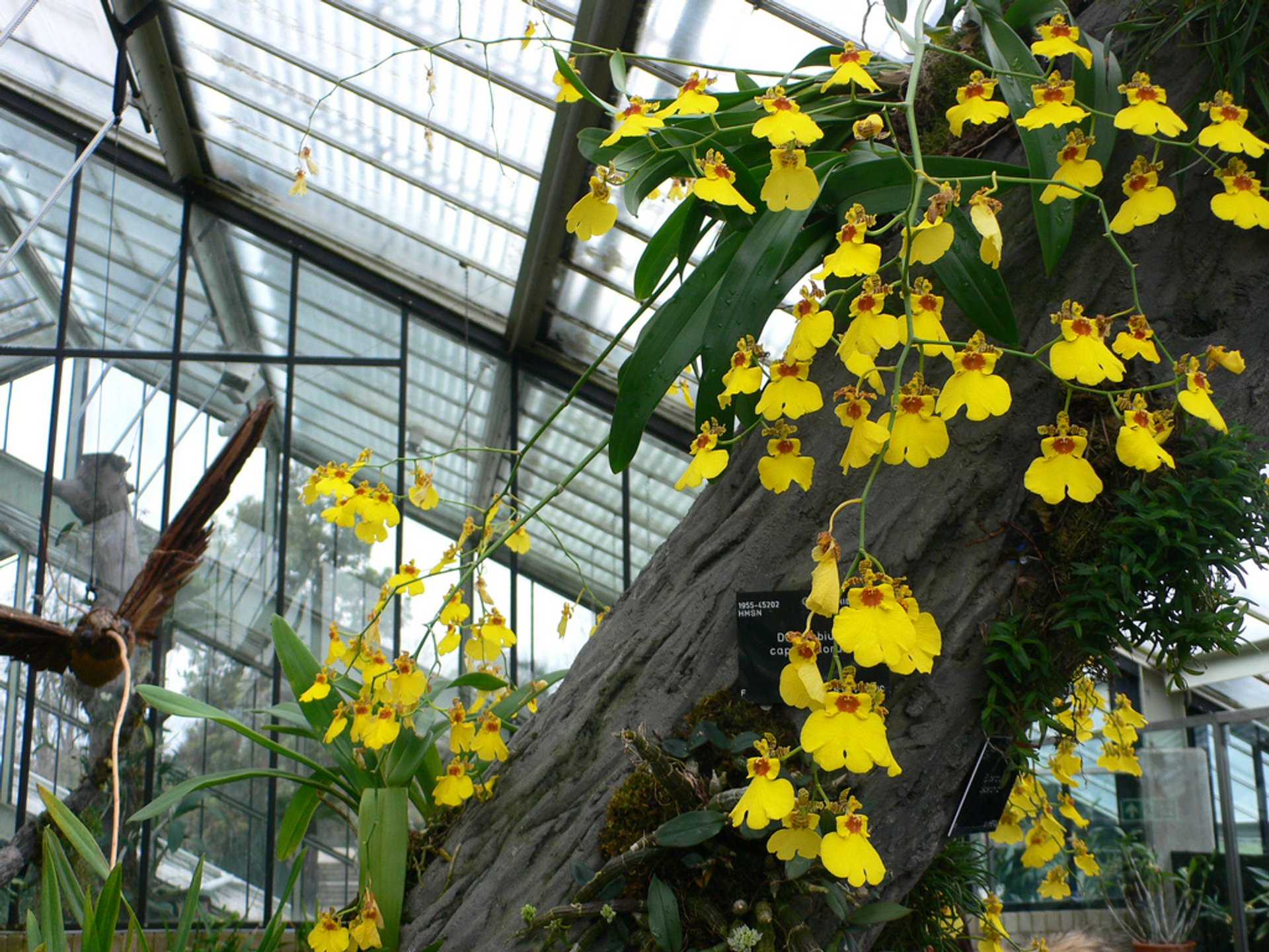 Best time for Orchids Festival at Kew Gardens in London 2020