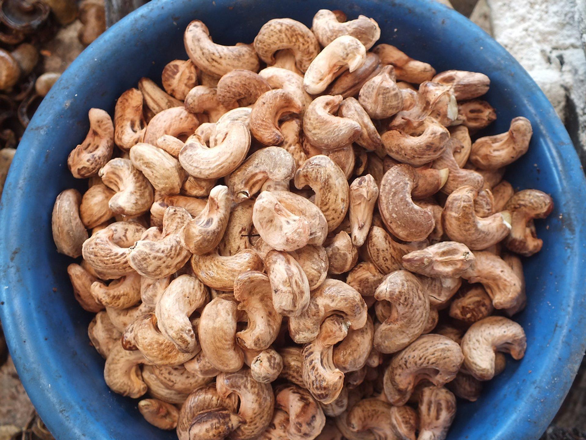 Cashew in Zanzibar - Best Season