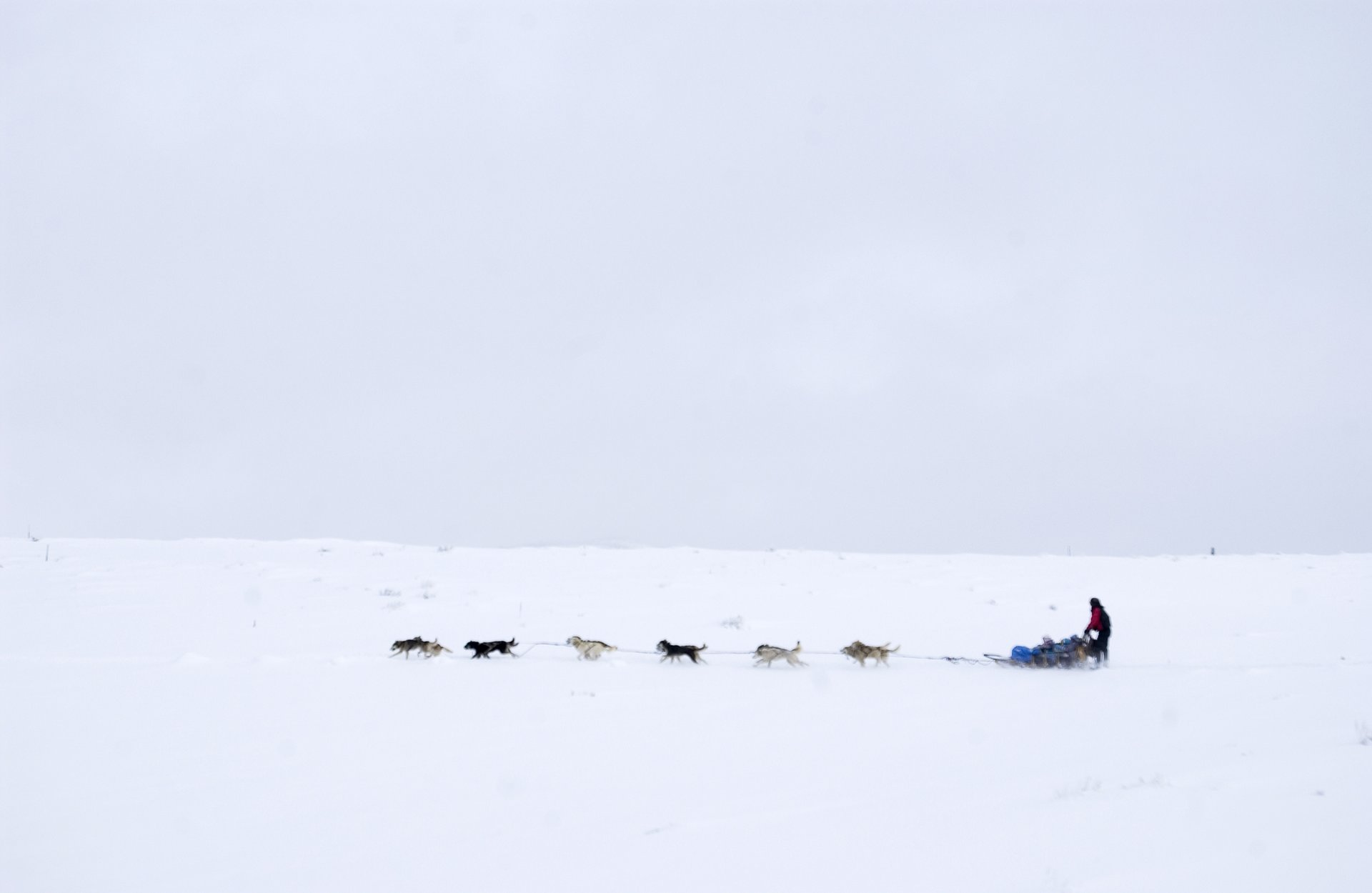 A sled dog team pulls its passengers through a winter landscape near Edwards 2020