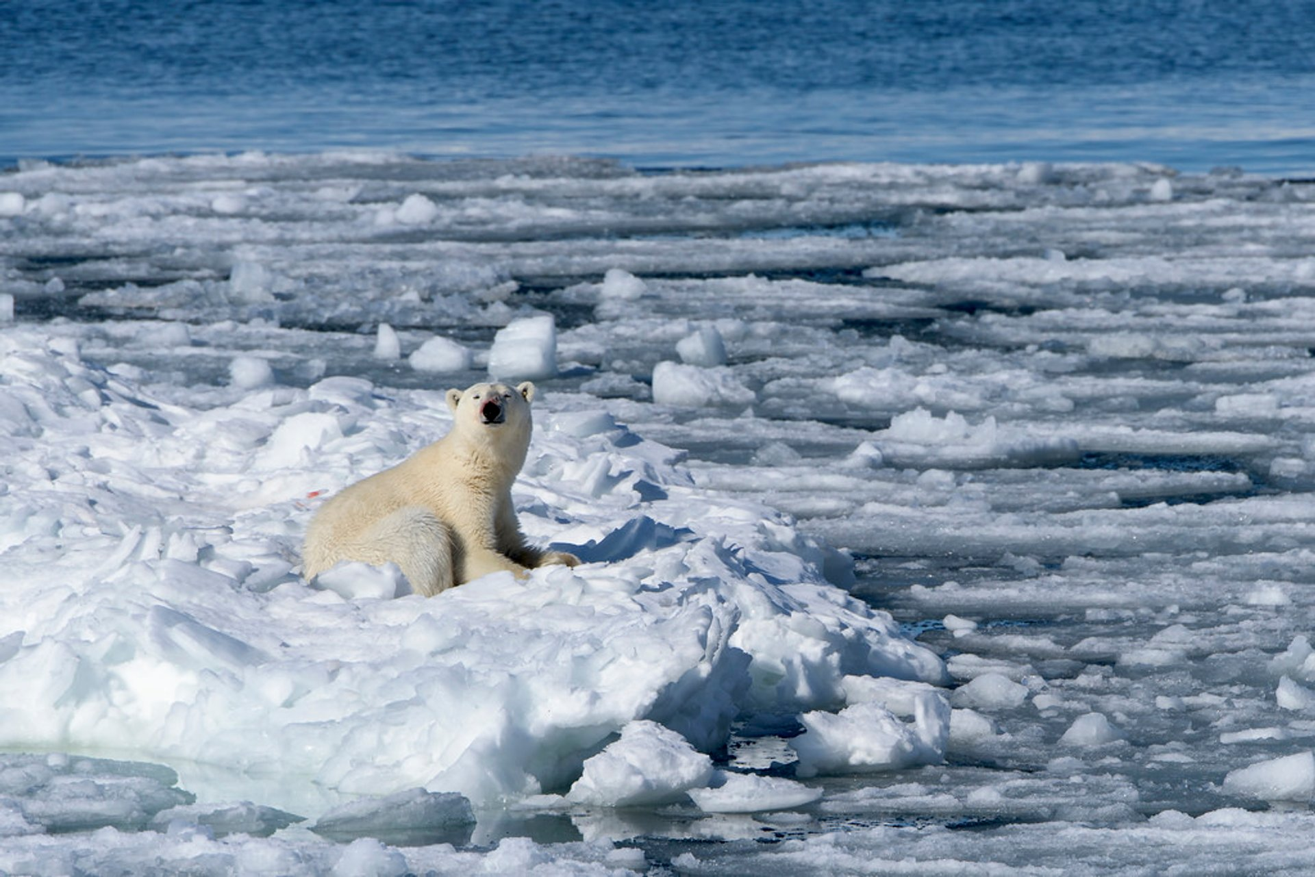 Best time to see Polar Bear Watching in Svalbard 2019