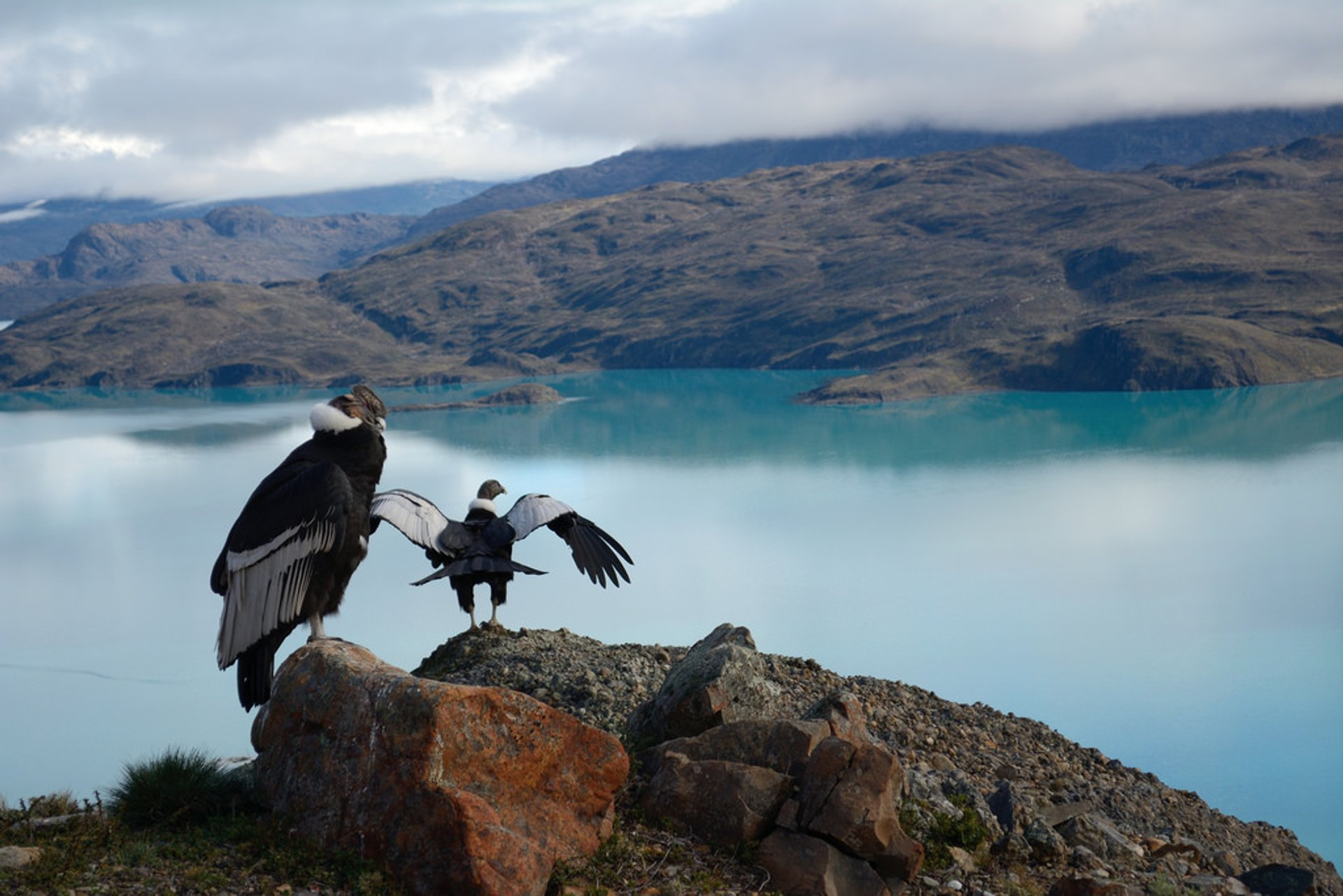 Best time to see Patagonia Wildlife in Chile