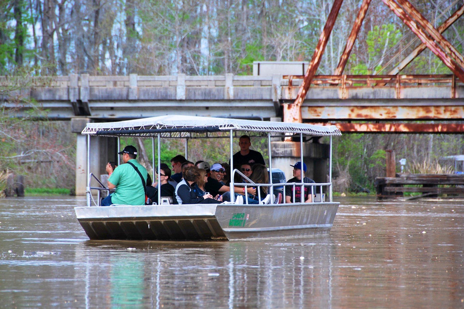 Swamp Tours in New Orleans - Best Season