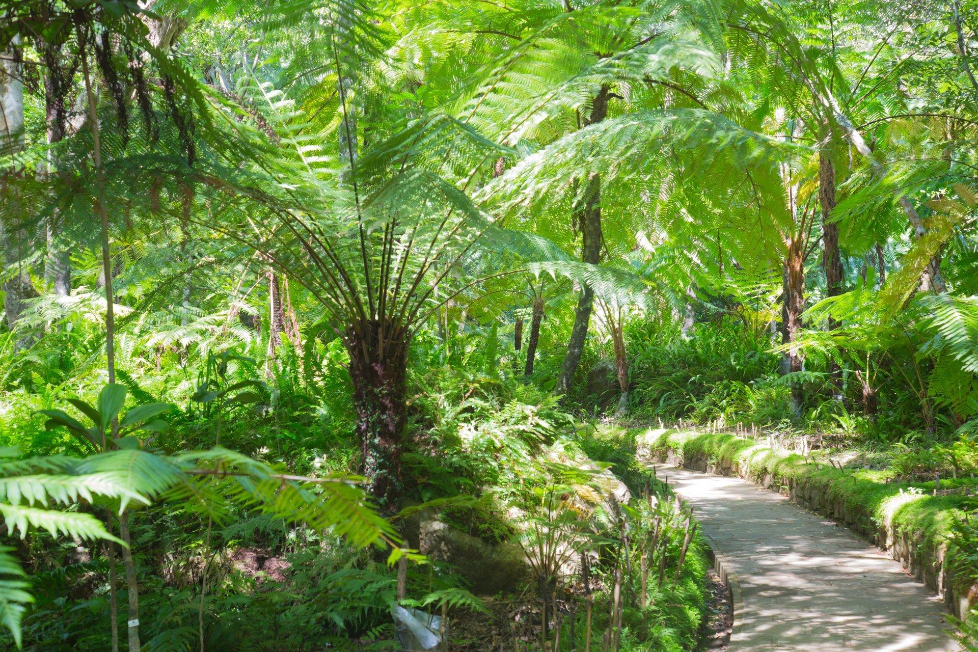 Best time for Hakgala Botanical Gardens in Sri Lanka 2020