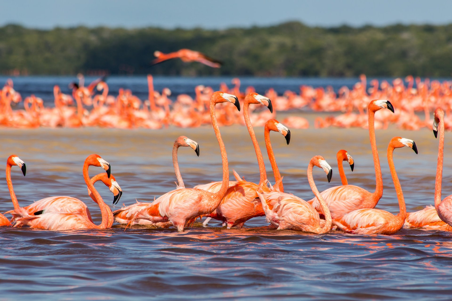Flamingos in Mexico 2020 - Best Time