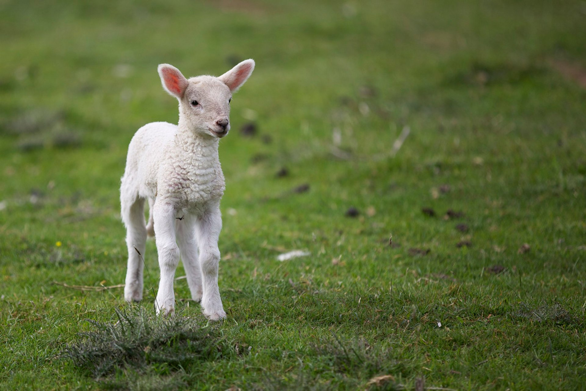 Best time to see Lambing Season in Ireland 2019