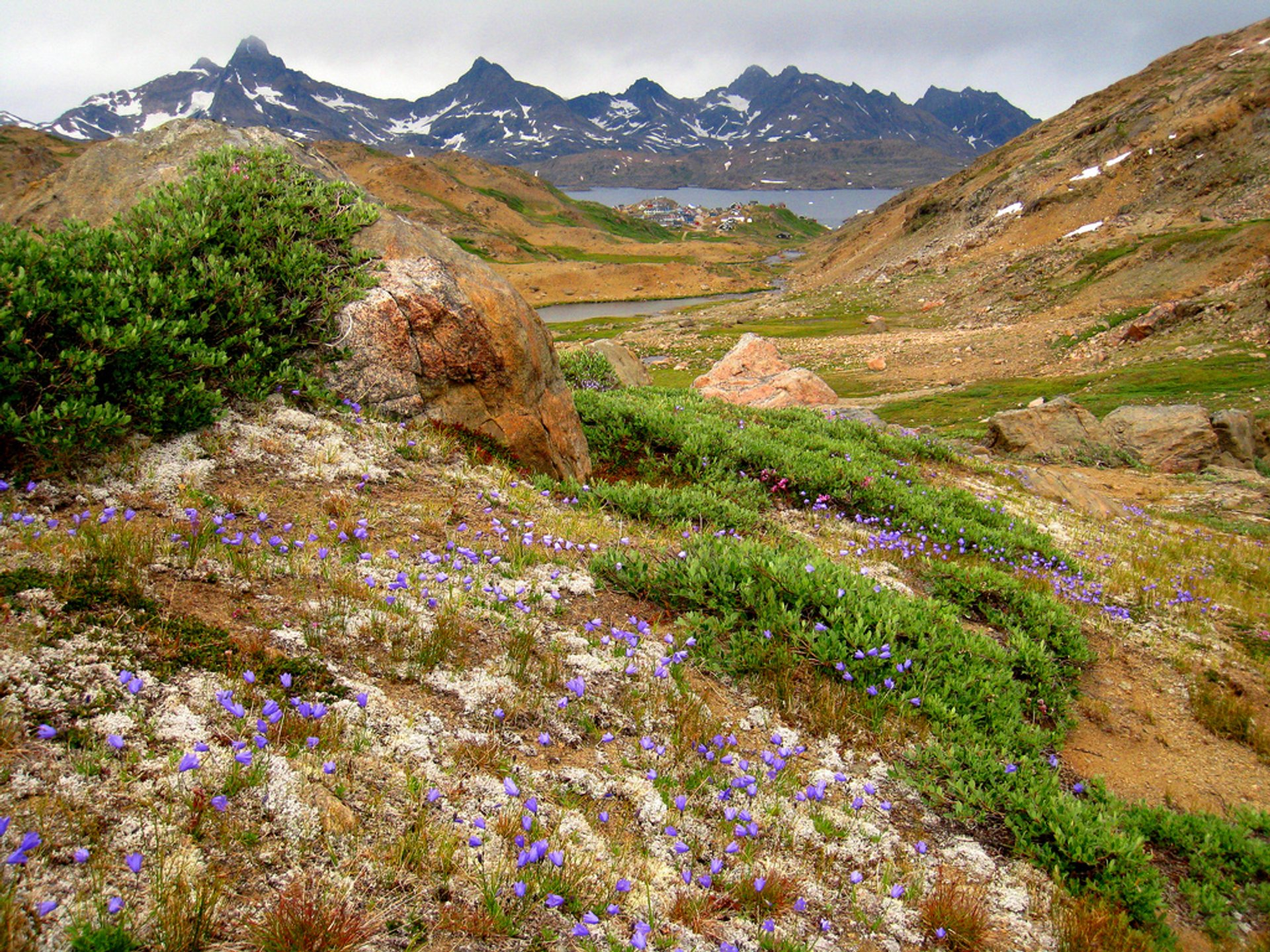Valley of the Flowers, Tasiilaq 2019